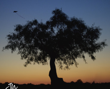silhouette-kite-arlington-tx-photographer