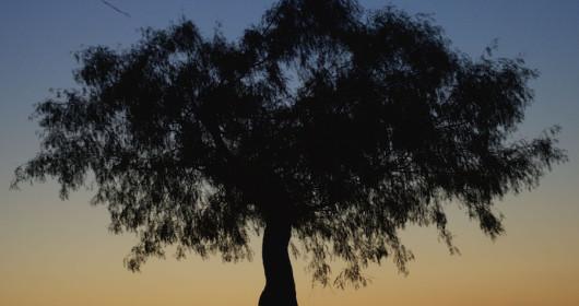 silhouette-kite-arlington-tx-photographer
